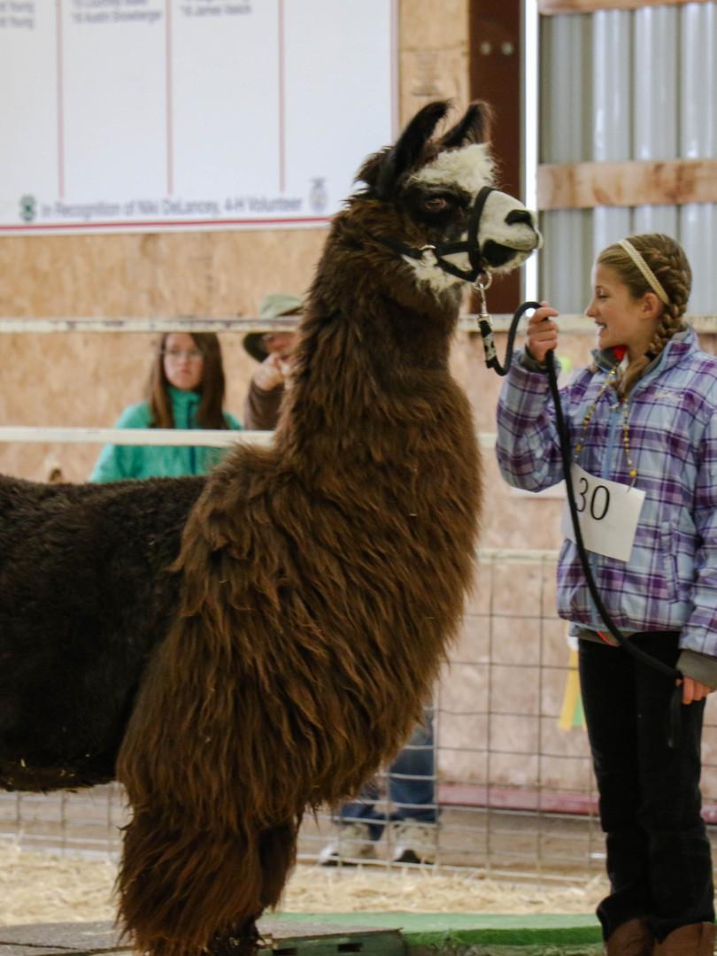 Llama-Show