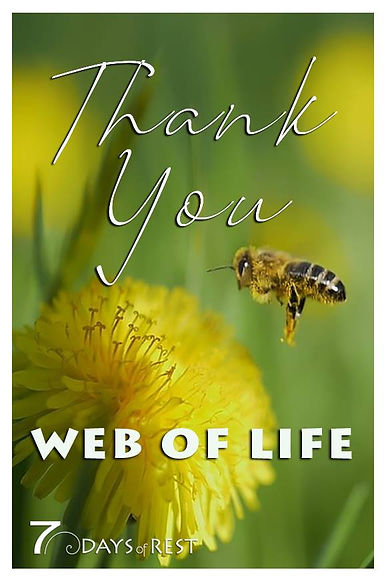 Thank you web of life.jpg