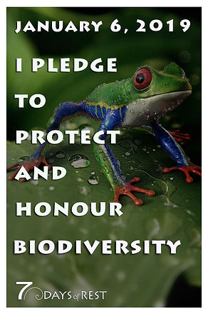 protect and honour biodiversity xr.jpg