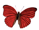 butterfly (1).png
