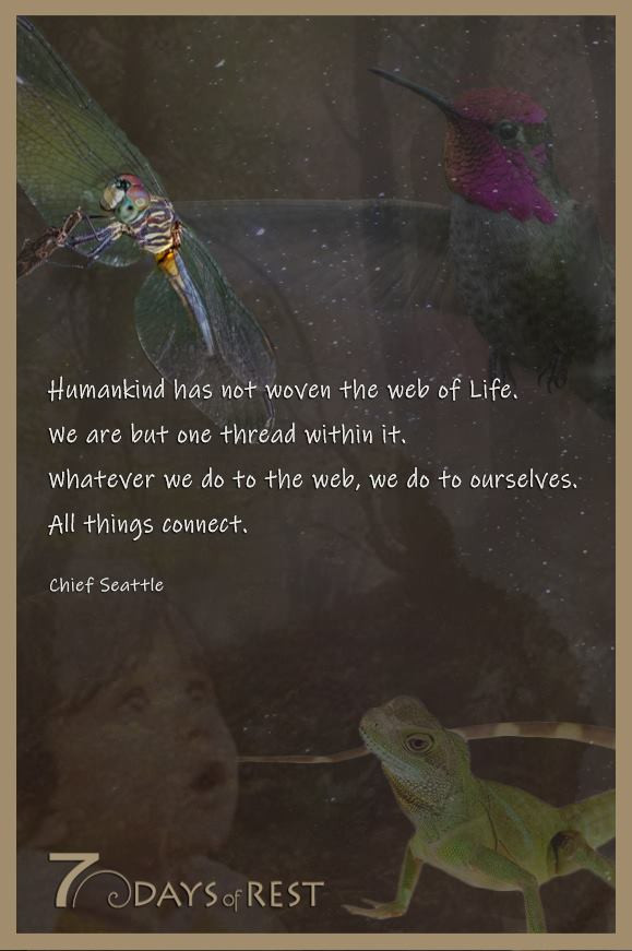 Web of life.jpg