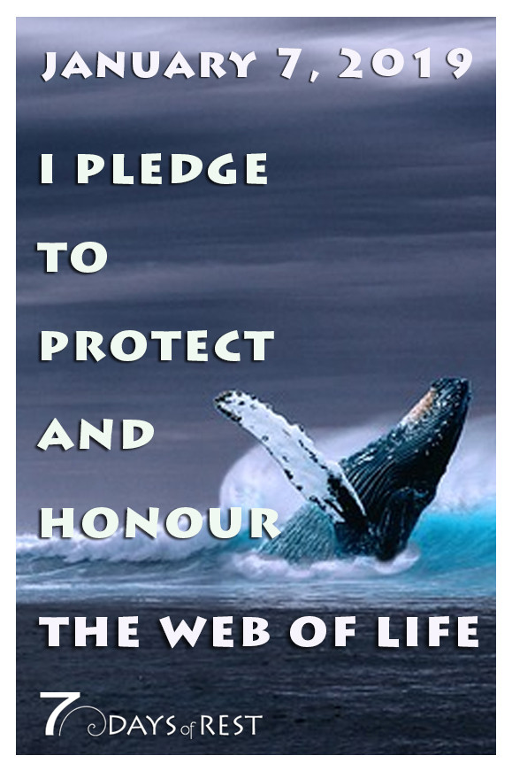 protect and honour the web of Life xr.jp