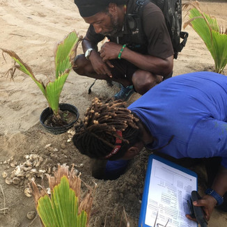 rangers excavating and surveying what is left of a clutch of eggs after they have hatched