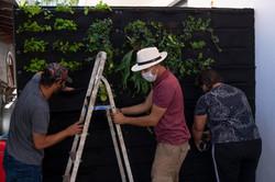 plantas-verticais-parede-verde-foto (60)