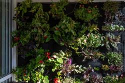 plantas-verticais-parede-verde-foto (26)