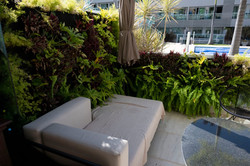 plantas-verticais-parede-verde-foto (36)