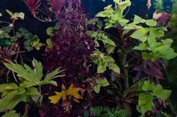plantas-verticais-parede-verde-foto (31)