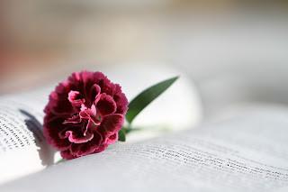 Profetisa Ana - o que podemos aprender com a sua vida? Lucas 2:36-38
