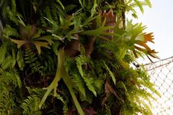 plantas-verticais-parede-verde-foto (18)