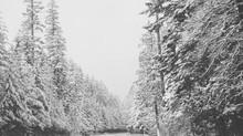 Portland Photo Tour Forum - Big & Beautiful, February Assignment