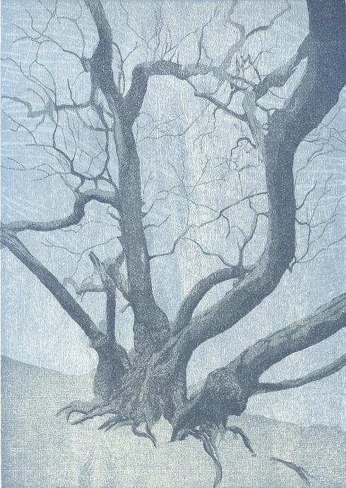 tree%60s%20lament%203_edited.jpg