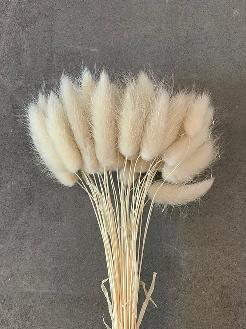 Bunny Tails // Ivory