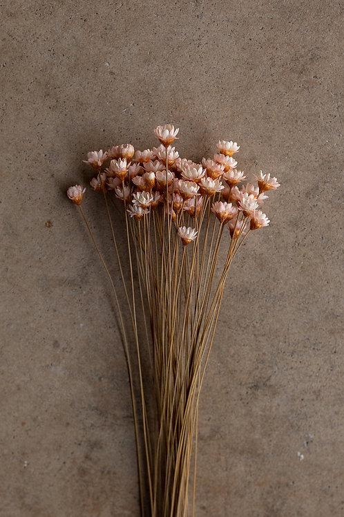 Mini Star Flowers // Light Pink