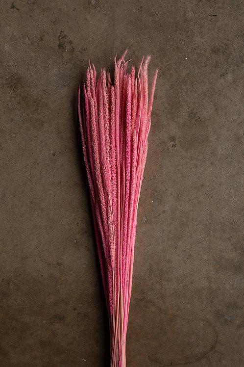 Kirin Grass // Bright Pink