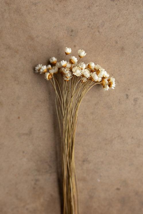 Mini Star Flowers // Ivory/White