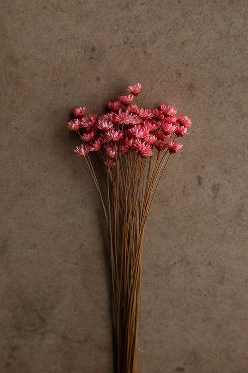 Mini Star Flowers // Bright Pink
