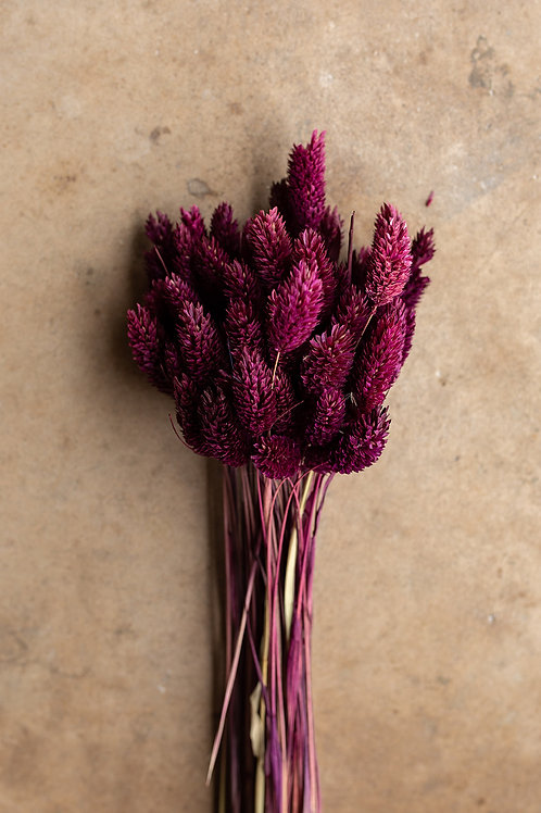 Dried Phalaris // Berry
