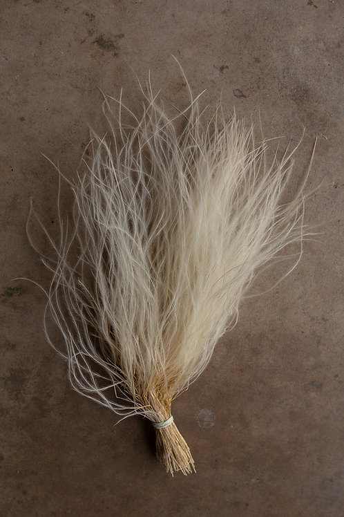 Feather Grass // Ivory