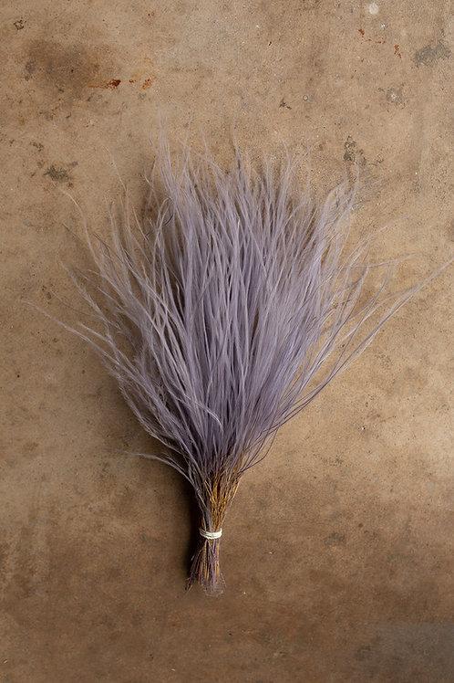 Feather Grass // Purple