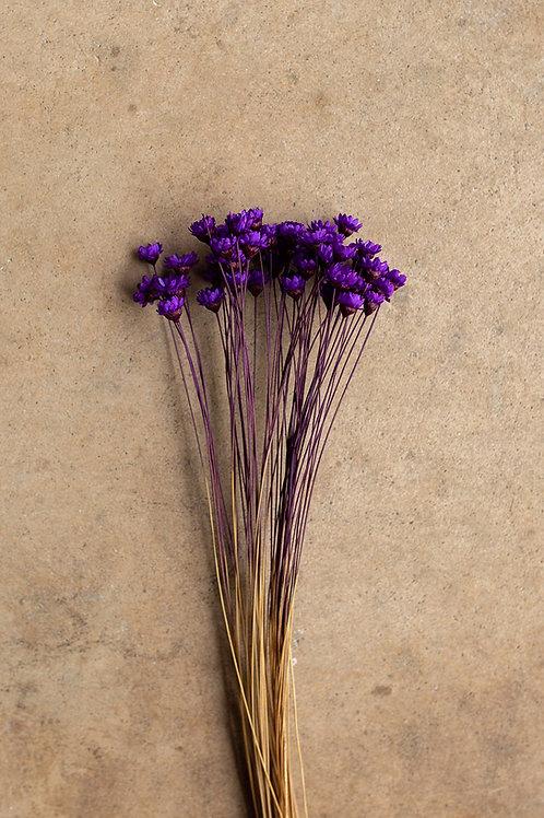 Mini Star Flowers // Bright Purple