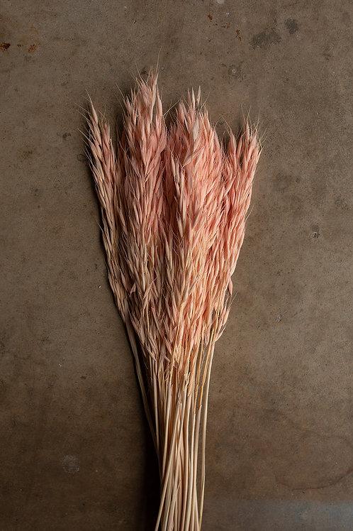Dried Avena Oat Flower // Light Pink