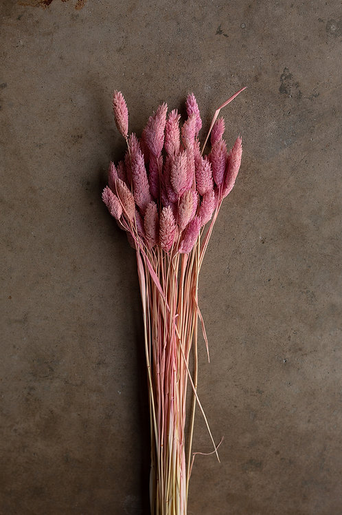 Dried Phalaris // Pink/Lavender Ombre