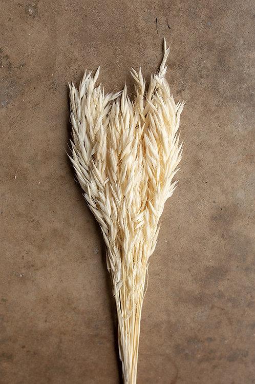 Dried Avena Oat Flower // White/Ivory
