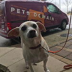 pets domain atx pet taxi