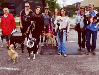 Domazing Dog Race & Pet-Tober Fest 2018