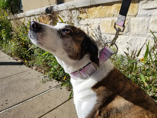 Recommended Leashes & Harnesses