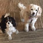 Sweet Sisters Chessie & Millie
