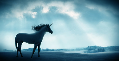 This Is Just A Magestic Unicorn Photo