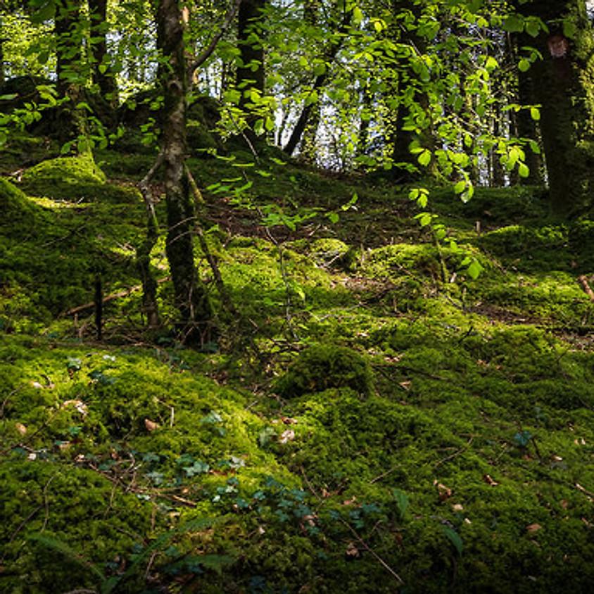 Reconnexion Nature en forêt de Fontainebleau