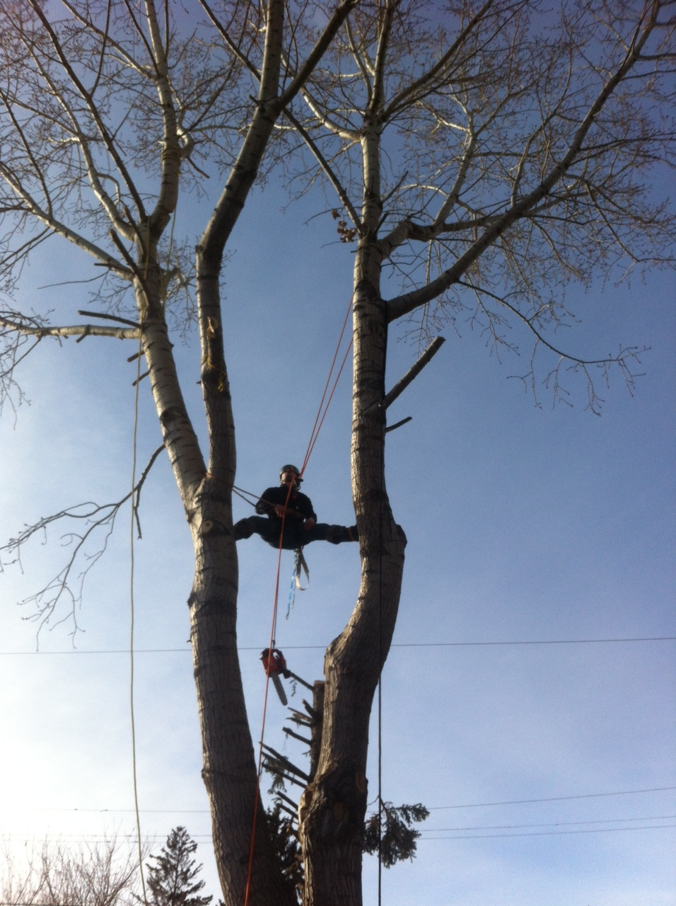 High Risk Poplar Reduction