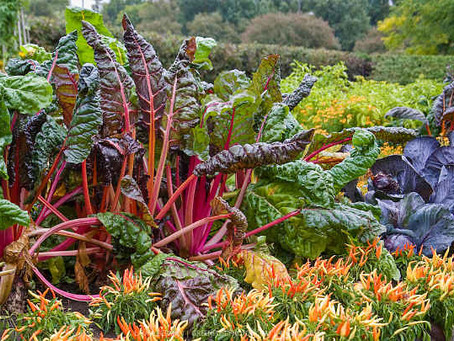 Edible Plants with Great Ornamental Value