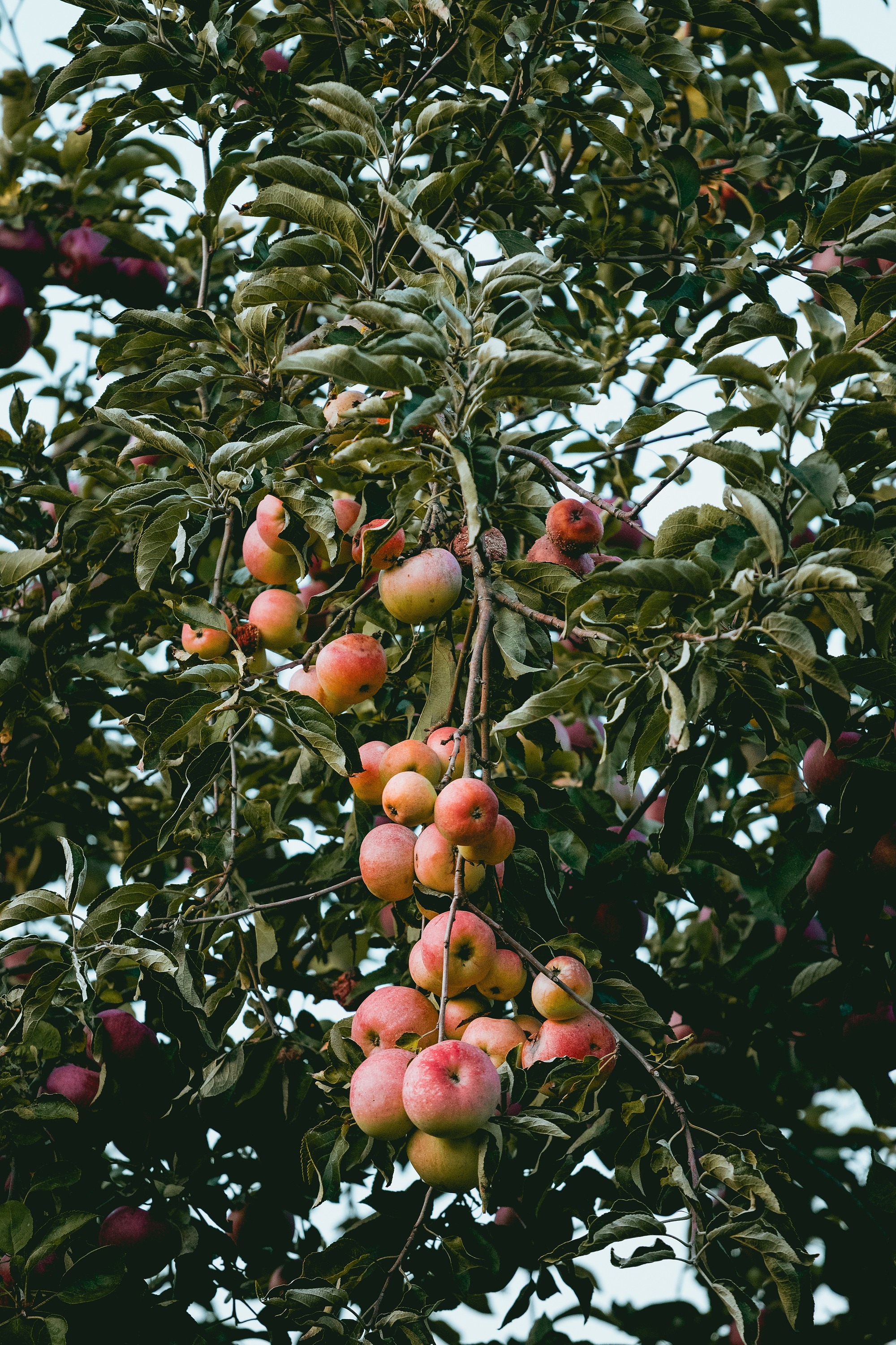 Benefits Of Planting Fruit Trees In The Fall