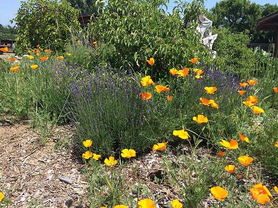 Native Pollinator Gardens