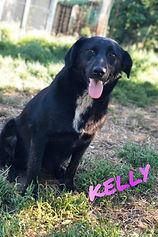 Kelly Pina I.jpg