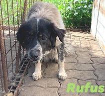 Rufus Pina K II - Kopie.jpg
