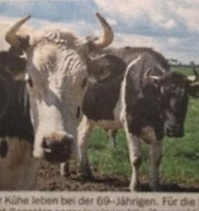 5 Kühe.jpg