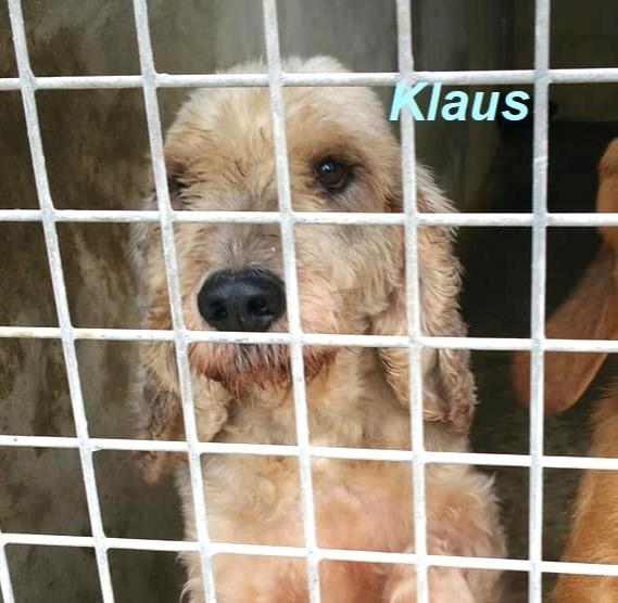 Klaus,ein Bild des Jammers..