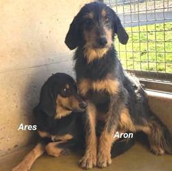 Aron und Ares