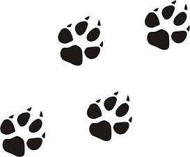 hundepfoten-wandtattoo-10-er-set-wandauf