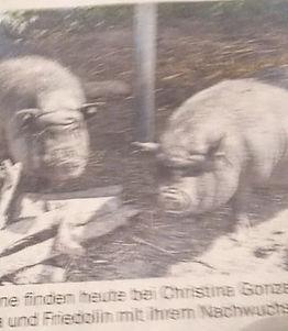 Schwein Fridolin.jpg