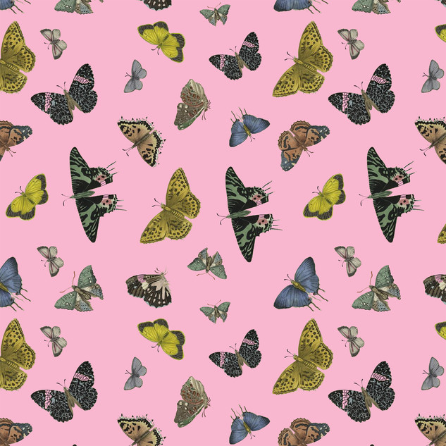 Papillons Butterfly