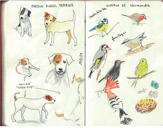 Chiens-et-oiseaux-web.jpg