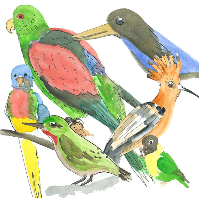 Water color painting. Birds in the Natur Historisches Museum Vienna