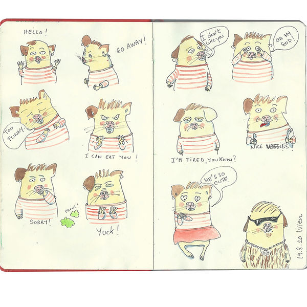 Cochon d'Inde expressifs.jpg