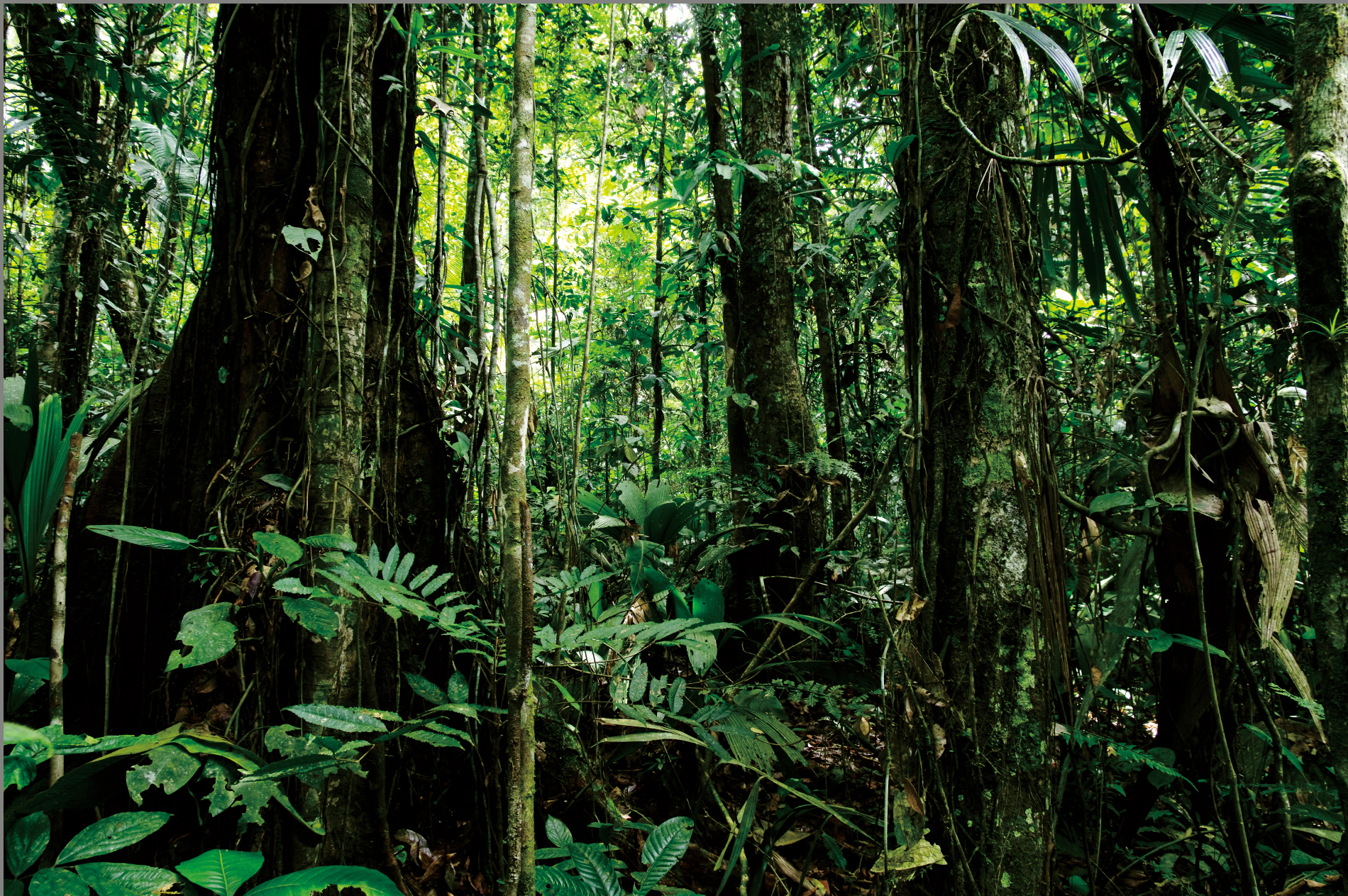 Amazon deep forest