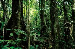 Amazon deep forest